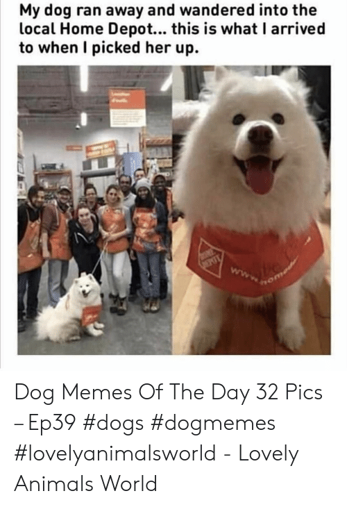 Animals, Dogs, and Memes: My dog ran away and wandered into the  local Home Depot... this is what I arrived  to when I picked her up. Dog Memes Of The Day 32 Pics – Ep39 #dogs #dogmemes #lovelyanimalsworld - Lovely Animals World