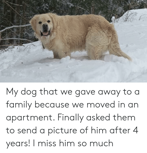 Family, A Picture, and Dog: My dog that we gave away to a family because we moved in an apartment. Finally asked them to send a picture of him after 4 years! I miss him so much