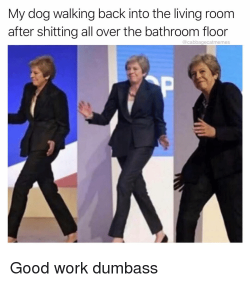 Work, Good, and Dank Memes: My dog walking back into the living room  after shitting all over the bathroom floor  @cabbagecatmemes Good work dumbass