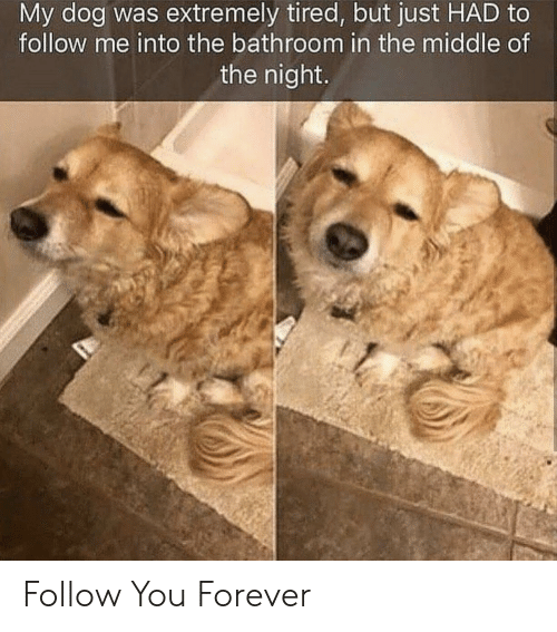 Forever, The Middle, and Dog: My dog was extremely tired, but just HAD to  follow me into the bathroom in the middle of  the night Follow You Forever