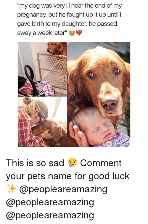 "Memes, Pets, and Good: ""my dog was very ill near the end of my  pregnancy, but he fought up it up until i  gave birth to my daughter. he passed  away a week later"" This is so sad 😢 Comment your pets name for good luck ✨ @peopleareamazing @peopleareamazing @peopleareamazing"