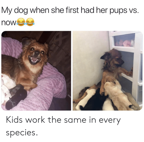 Dank, Work, and Kids: My dog when she first had her pups vs.  now Kids work the same in every species.