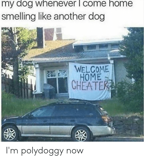 Dank, Home, and 🤖: my dog whenever l come home  smelling like another dog  WELCOME  HOME  CHEATER I'm polydoggy now