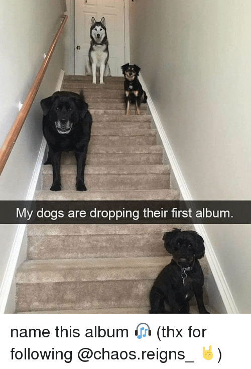Dogs, Memes, and 🤖: My dogs are dropping their first album. name this album 🎧 (thx for following @chaos.reigns_ 🤘)