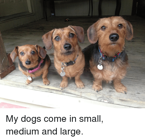 Dogs, Medium, and  Come: My dogs come in small, medium and large.