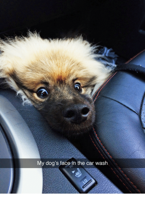 Dogs, Car Wash, and Car: My dog's face in the car wash