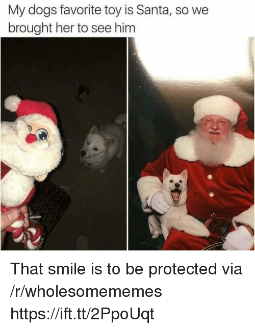 Dogs, Santa, and Smile: My dogs favorite toy is Santa, so we  brought her to see him That smile is to be protected via /r/wholesomememes https://ift.tt/2PpoUqt