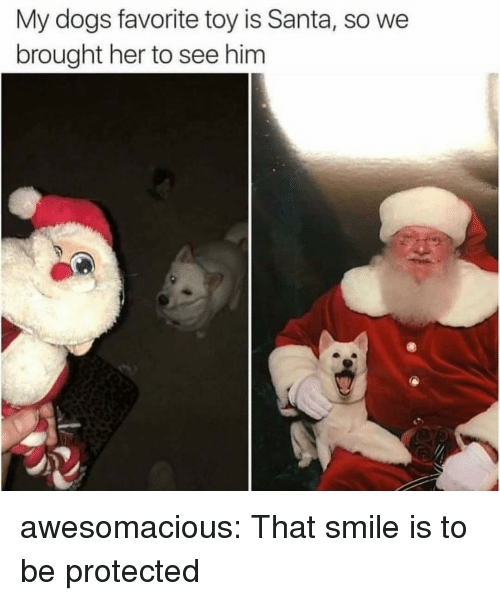 Dogs, Tumblr, and Blog: My dogs favorite toy is Santa, so we  brought her to see him awesomacious:  That smile is to be protected