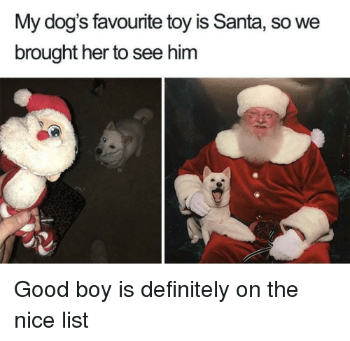Definitely, Dogs, and Good: My dog's favourite toy is Santa, so we  brought her to see him Good boy is definitely on the nice list