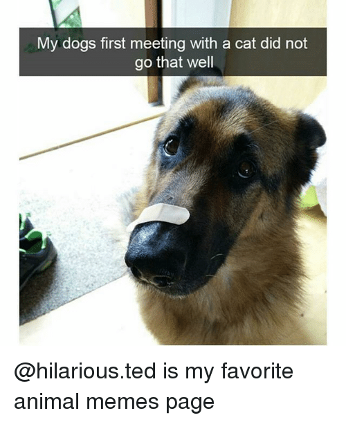 Dogs, Memes, and Ted: My dogs first meeting with a cat did not  go that well @hilarious.ted is my favorite animal memes page