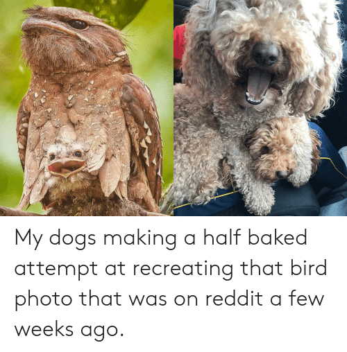 My Dogs Making a Half Baked Attempt at Recreating That Bird
