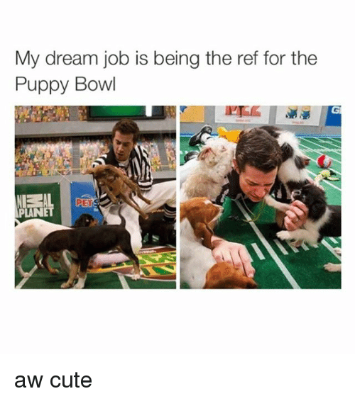 Puppies, Bowling, and Jobs: My dream job is being the ref for the  Puppy Bowl  PLANET aw cute