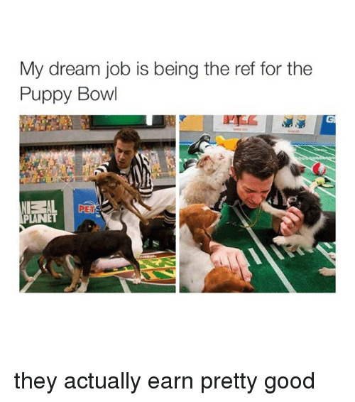 Puppies, Bowling, and Jobs: My dream job is being the ref for the  Puppy Bowl  PLANE they actually earn pretty good