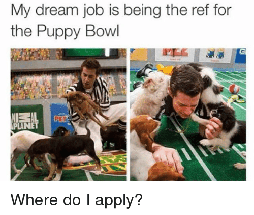 Puppy, Girl Memes, and The Ref: My dream job is being the ref for  the Puppy Bowl  PET  PLANET Where do I apply?