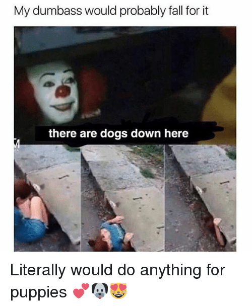 Dogs, Fall, and Memes: My dumbass would probably fall for it  there are dogs down here Literally would do anything for puppies 💕🐶😻