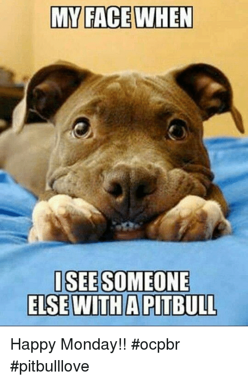 Funny Happy Monday Meme : My face when isee someone else witha pitbull happy monday