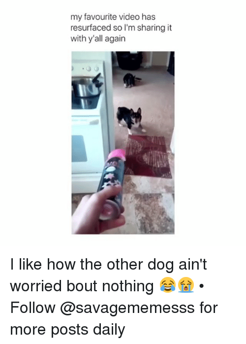 Memes, Video, and 🤖: my favourite video has  resurfaced so I'm sharing it  with y'all again I like how the other dog ain't worried bout nothing 😂😭 • Follow @savagememesss for more posts daily