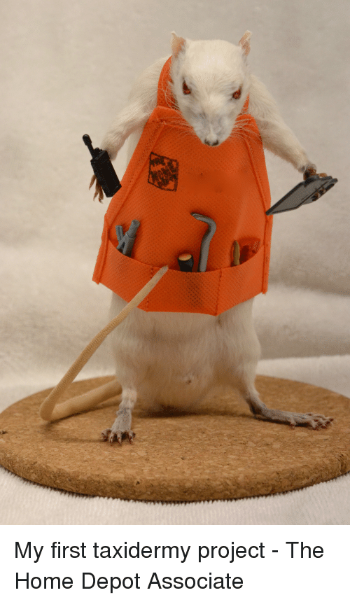 [Image: my-first-taxidermy-project-the-home-depo...356383.png]