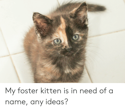 Ideas, Name, and Kitten: My foster kitten is in need of a name, any ideas?