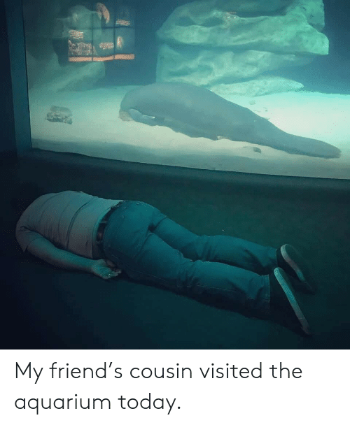 Aquarium, Today, and Friend: My friend's cousin visited the aquarium today.