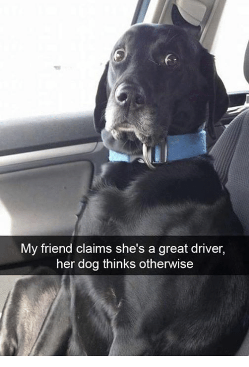 my-friend-claims-shes-a-great-driver-her-dog-thinks-26532499.png