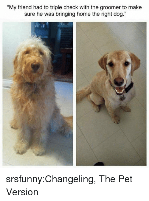 "Tumblr, Blog, and Home: ""My friend had to triple check with the groomer to make  sure he was bringing home the right dog."" srsfunny:Changeling, The Pet Version"