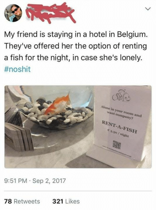Being Alone, Belgium, and Fish: My friend is staying in a hotel in Belgium.  They've offered her the option of renting  a fish for the night, in case she's lonely.  #noshit  Alone in your room and  want company?  RENT-A-FISH  ea-so / night  9:51 PM Sep 2, 2017  321 Likes  78 Retweets