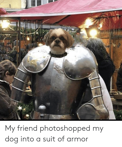 My Friend Photoshopped My Dog Into a Suit of Armor