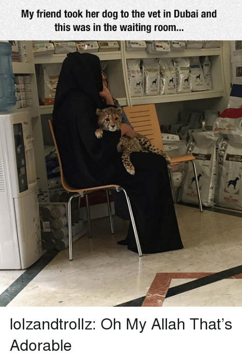 Tumblr, Blog, and Http: My friend took her dog to the vet in Dubai and  this was in the waiting room... lolzandtrollz:  Oh My Allah That's Adorable
