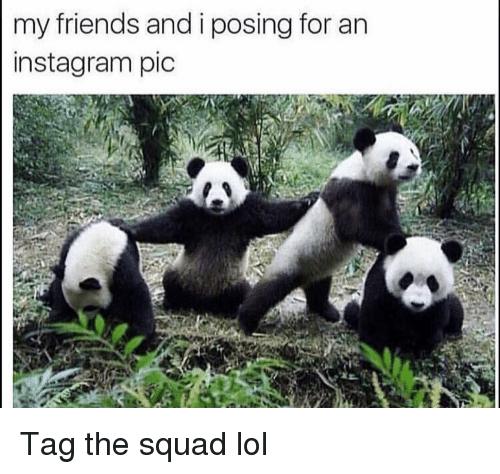 Friends, Funny, and Instagram: my friends and i posing for an  instagram pic Tag the squad lol