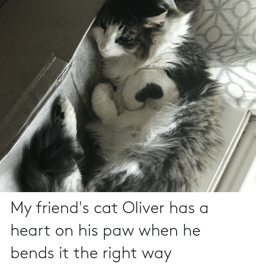 Friends, Heart, and Cat: My friend's cat Oliver has a heart on his paw when he bends it the right way