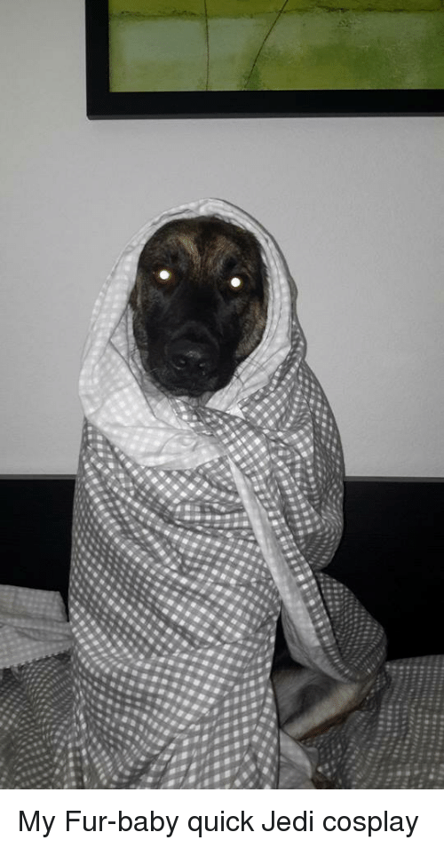 Jedi, Cosplay, and Baby: My Fur-baby quick Jedi cosplay