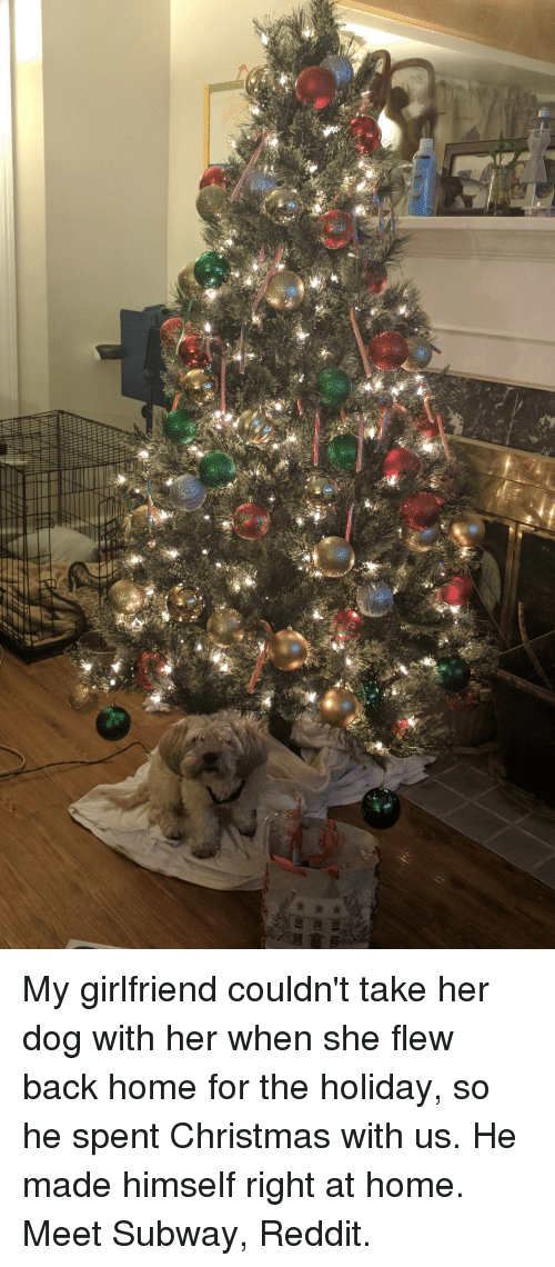 christmas reddit and subway my girlfriend couldnt take her dog with - Subway Christmas Eve Hours