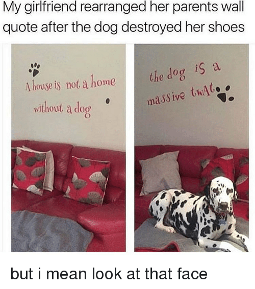 Memes, Shoes, and 🤖: My girlfriend rearranged her parents wall  quote after the dog destroyed her shoes  A house is not a home the dog is a  massive twAt.  without a do but i mean look at that face
