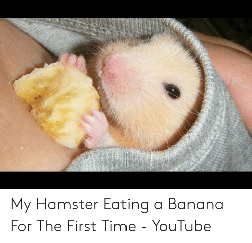 My Hamster Eating A Banana For The First Time Youtube Youtube Com Meme On Me Me