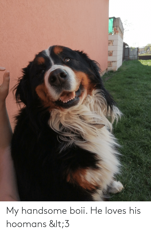 Handsome, Loves, and Hoomans: My handsome boii. He loves his hoomans <3