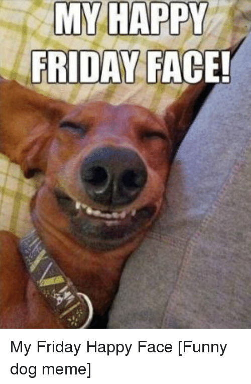 Funny Good Friday Meme : Best memes about funny dog meme