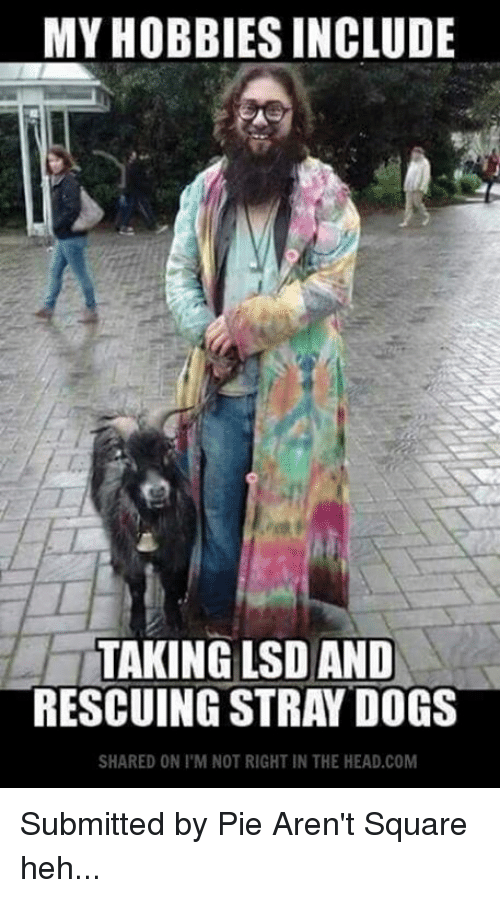 Head, Memes, and Square: MY HOBBIES INCLUDE  TAKING LSD AND  RESCUING STRAY DOGS  SHARED ON I M NOT RIGHT IN THE HEAD.COM Submitted by Pie Aren't Square  heh...