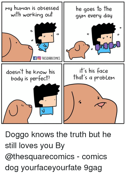 9gag, Memes, and Working Out: my human is obsessed  with working out  he qoes to the  gyn every day  fTHESQUARECOMICS  doesn't he know his  body is perfect?  it's his face  that's a probleM Doggo knows the truth but he still loves you⠀ By @thesquarecomics⠀ -⠀ comics dog yourfaceyourfate 9gag