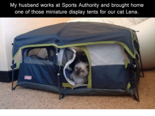 Sports Home and Sports Authority My husband works at Sports Authority and brought & My Husband Works at Sports Authority and Brought Home One of Those ...