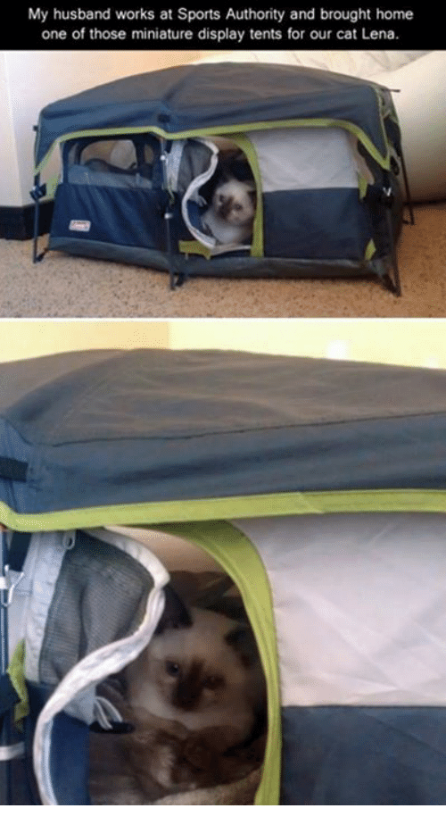 My husband works at Sports Authority and brought home one of those miniature display tents for our cat Lena Meme & My Husband Works at Sports Authority and Brought Home One of Those ...
