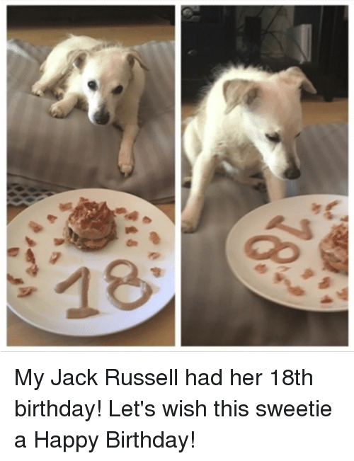 my jack russell had her 18th birthday lets wish this 27858890 my jack russell had her 18th birthday! let's wish this sweetie a