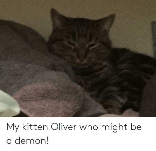 Demon, Who, and Kitten: My kitten Oliver who might be a demon!