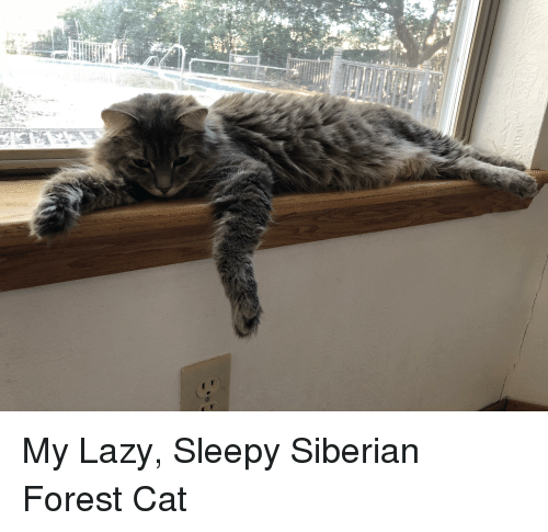 Lazy, Cat, and Forest