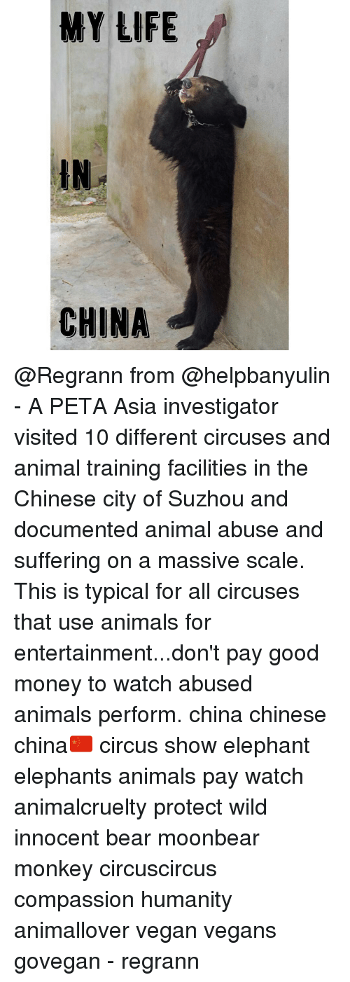 MY LIFE CHINA From - A PETA Asia Investigator Visited 10