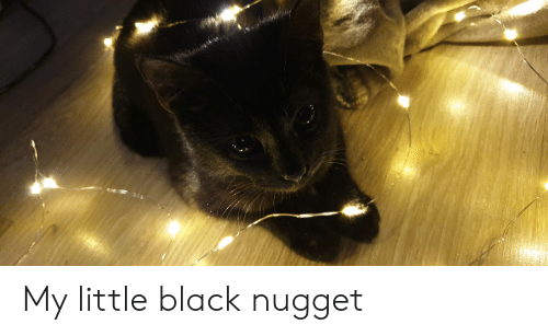 Black, My Little, and Nugget: My little black nugget