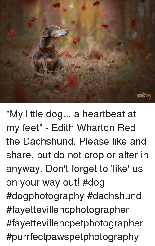 My Little Dog A Heartbeat At My Feet Edith Wharton Red The