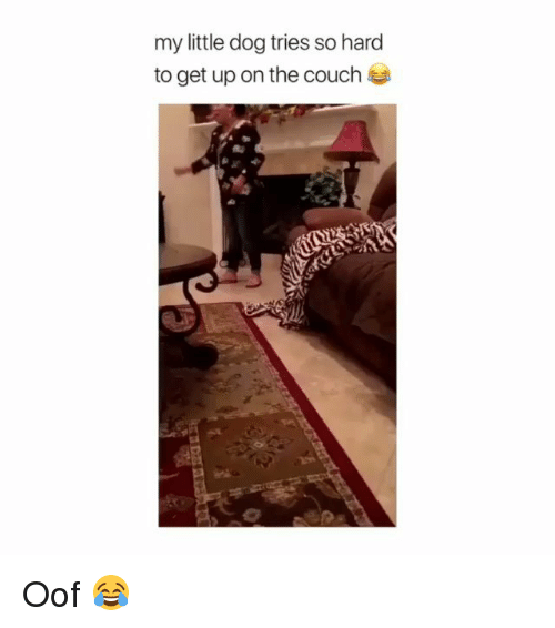 Memes, Couch, and 🤖: my little dog tries so hard  to get up on the couch Oof 😂