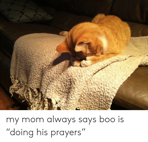 """Boo, Mom, and Always: my mom always says boo is """"doing his prayers"""""""