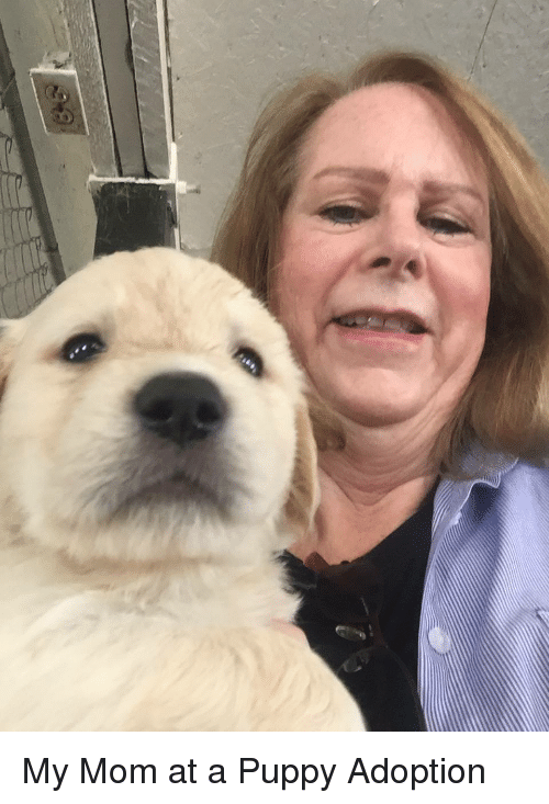 Puppy, Mom, and My Mom: My Mom at a Puppy Adoption